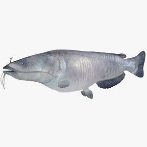 3D blue catfish fish
