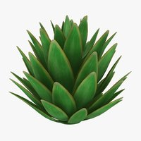 blue glow agave 3D model