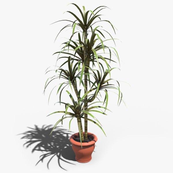 tree planted dracaena marginata 3D