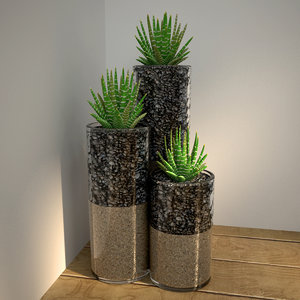 3D succulents glass pot model