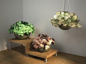 3D bush fittonia plant pot