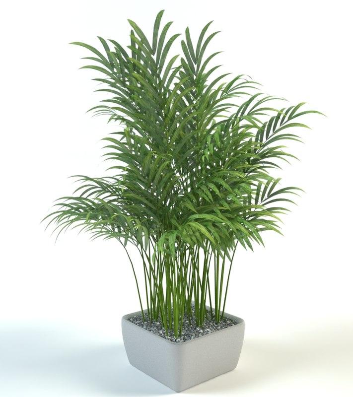 palm pot model