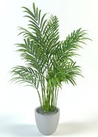 palm in pot