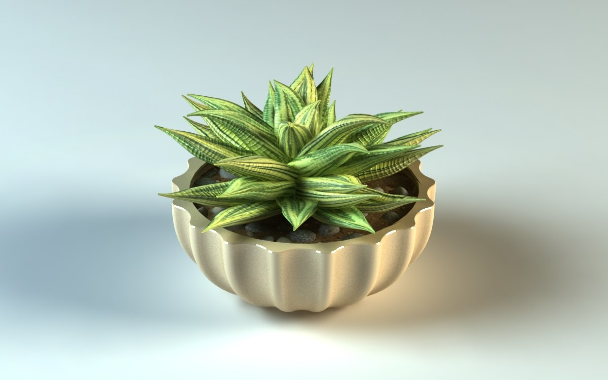 3D haworthia pot model