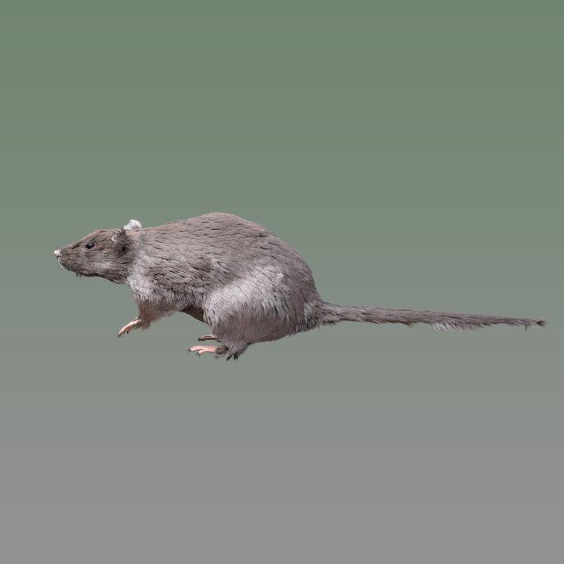rigged rat 3D
