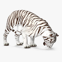 White Tiger Rigged
