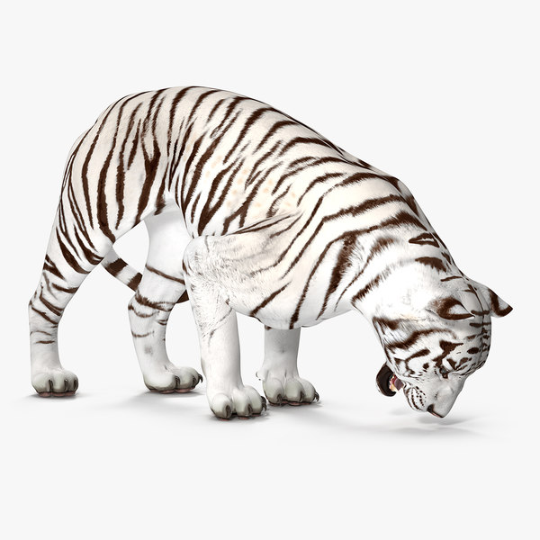 3D white tiger rigged