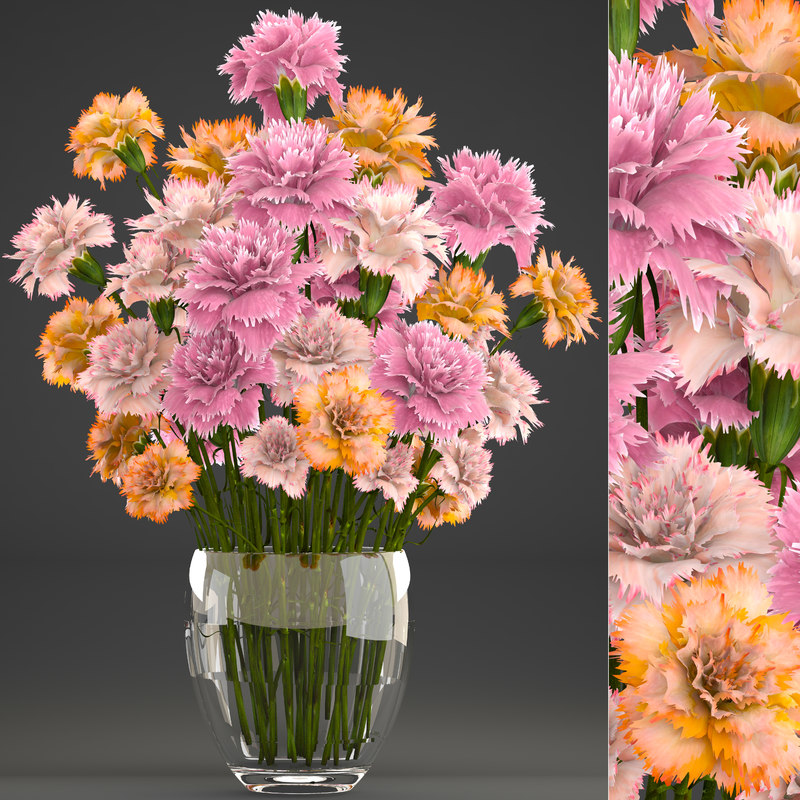 3D bouquet flowers dianthus carnations model