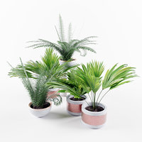 Pot plants 3 palms and 2 ferns 3D model