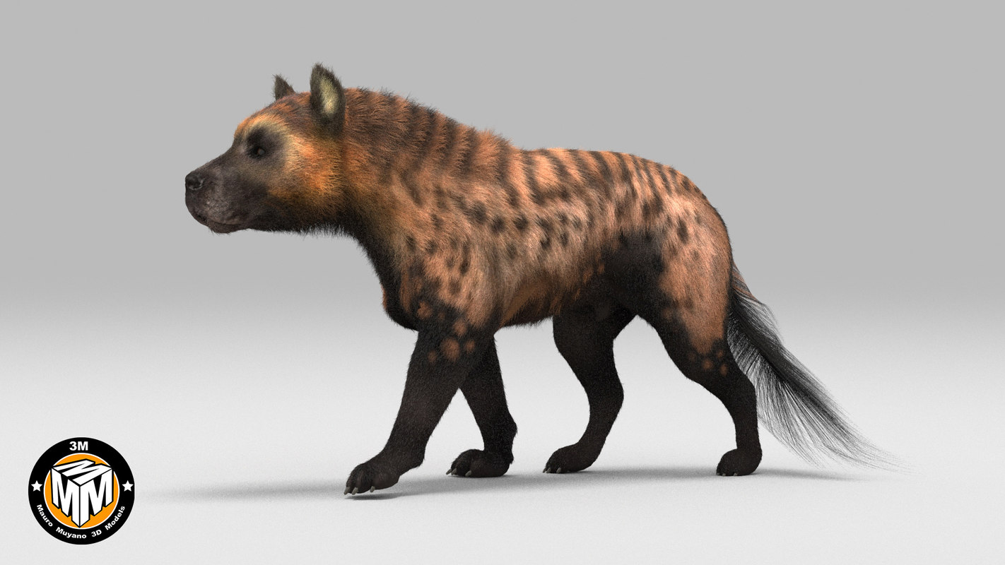 3D protocyon extinct canid