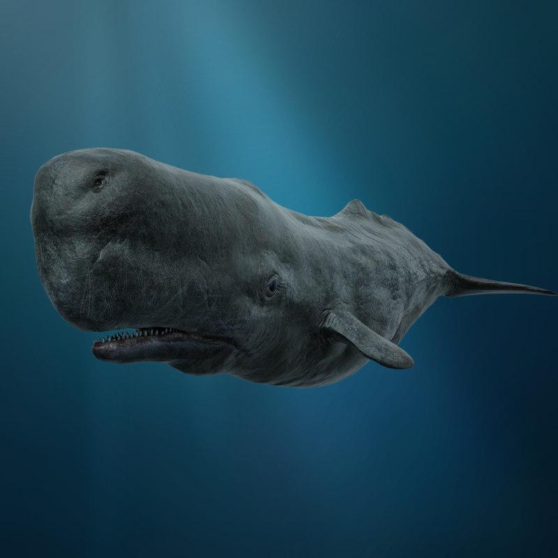 sperm whale model