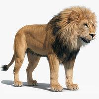 3D fur lion