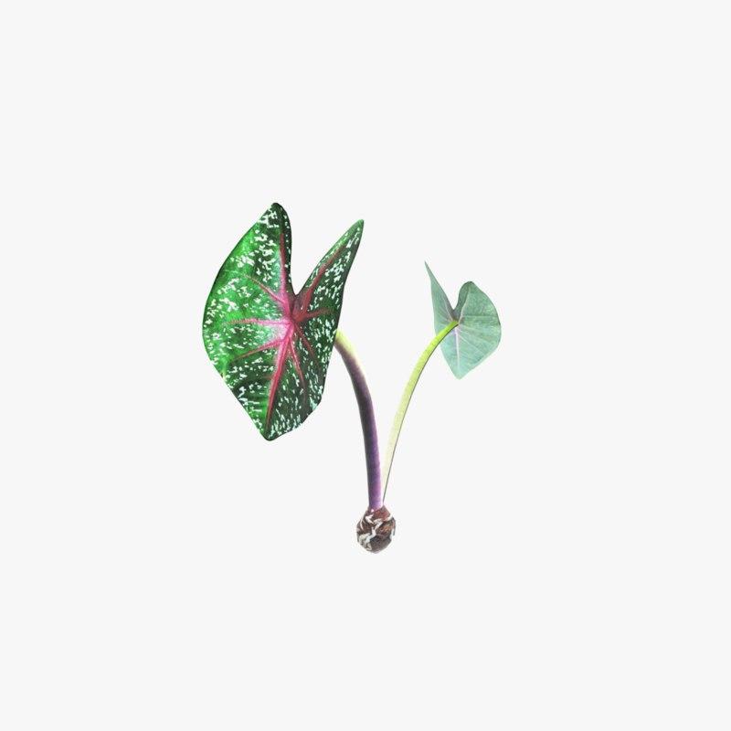 ornamental plant 3D model