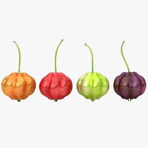 surinam cherry 3D