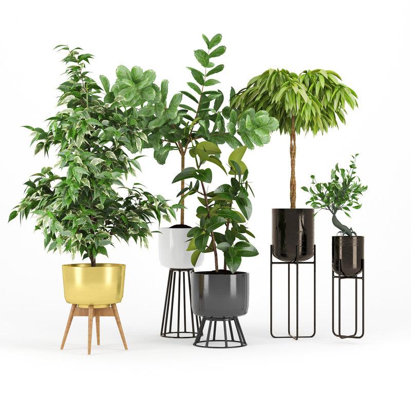 plant pot ficus model