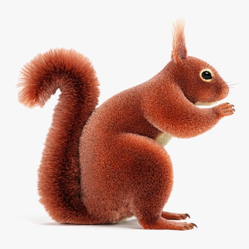 american squirrel 3D model