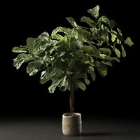 ficus woven seagrass basket 3D model