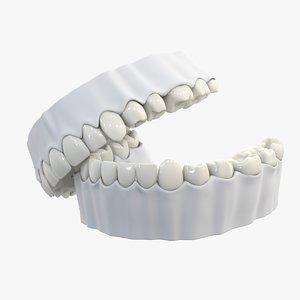 3D model gums teeth anatomy