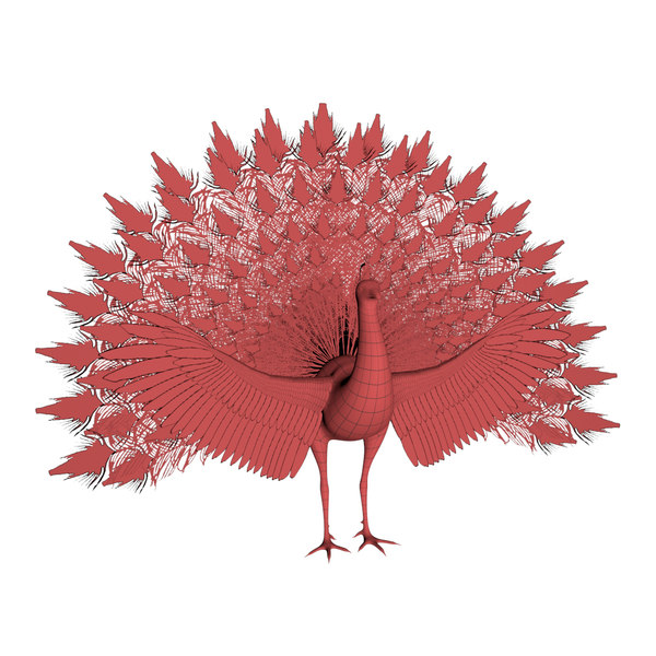 base mesh peacock 3D