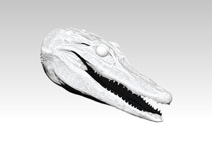 3D model head alligator american