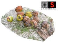 coconuts beach 3D model