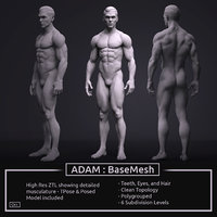 Male BaseMesh - Adam - ZTool 4R8
