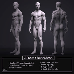 3D model zbrush male anatomy basemesh