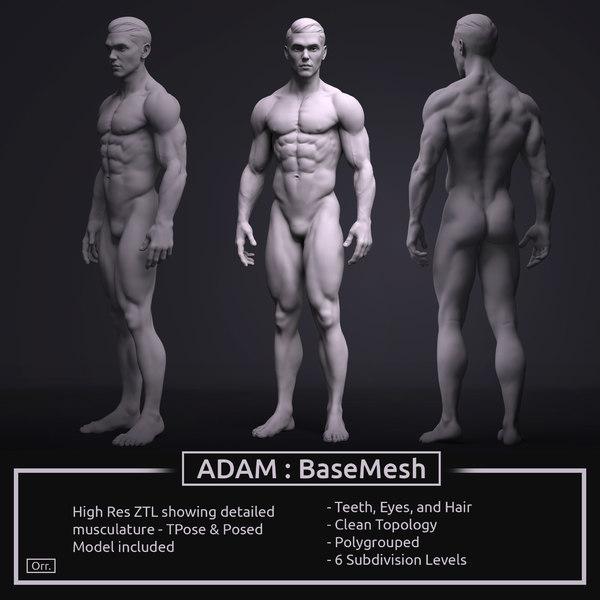 3D model zbrush male anatomy basemesh