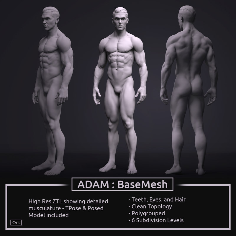 3D model zbrush male anatomy basemesh - TurboSquid 1277873