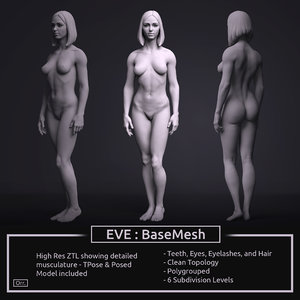 3D zbrush female anatomy basemesh