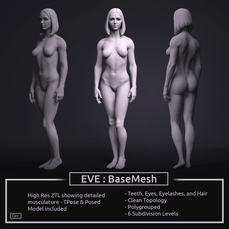 3D zbrush female anatomy basemesh - TurboSquid 1277878