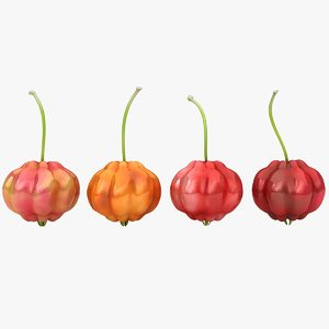 surinam cherry color 2 3D