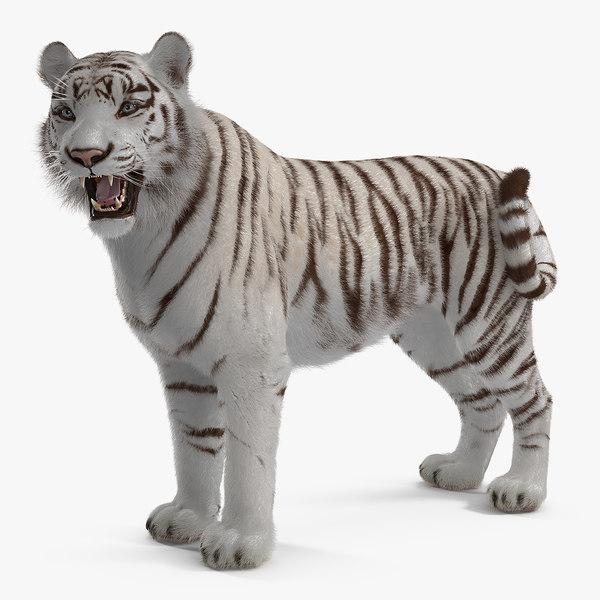 3D model white tiger rigged fur