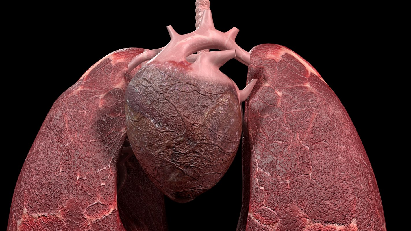 heart and lung Find heart-lung stock images in hd and millions of other royalty-free stock photos, illustrations, and vectors in the shutterstock collection thousands of new, high-quality pictures added every day.