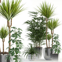 Plants collection 90