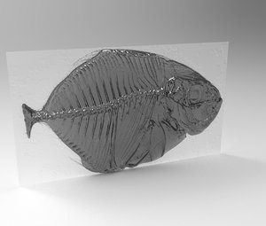 xray fish modeled 3D model