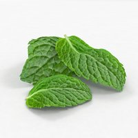 Mint leaf realistic