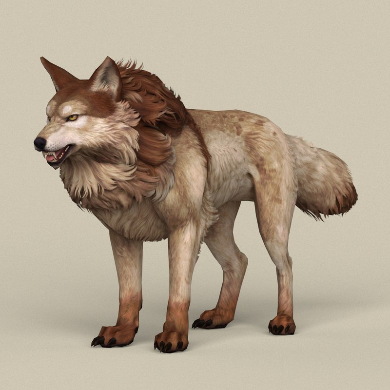 3D ready brown wolf