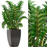 3D zamioculcas plants lechuza model