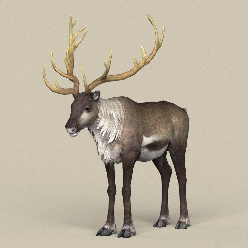 ready reindeer model