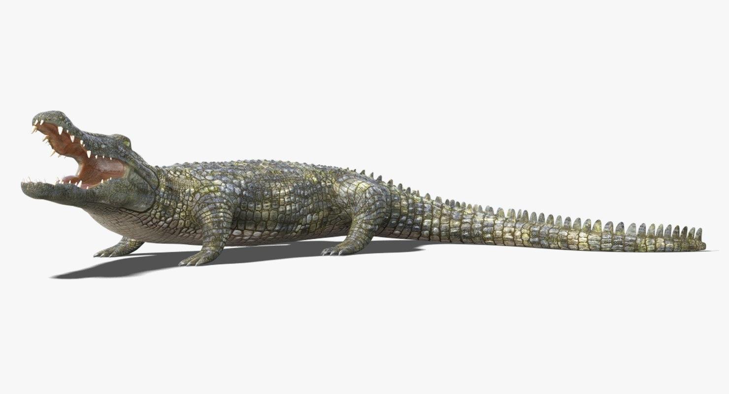 3D realistic crocodile 2 rigged