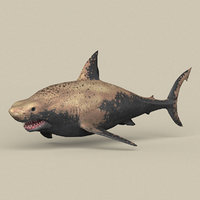 3D ready shark