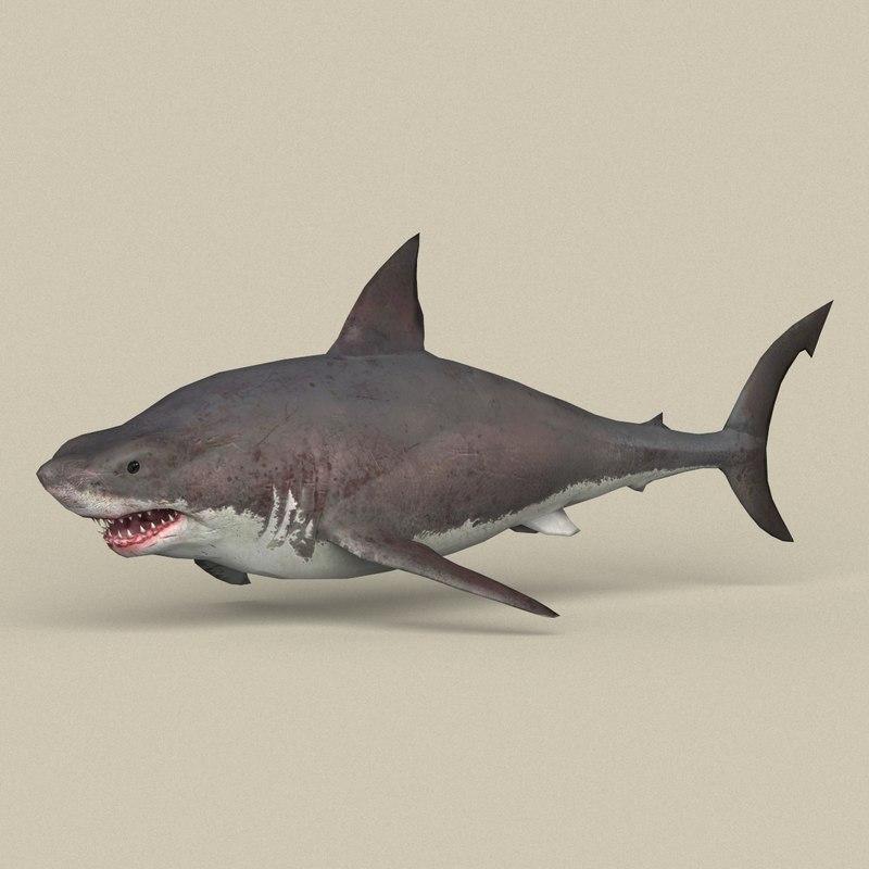 ready white shark 3D model