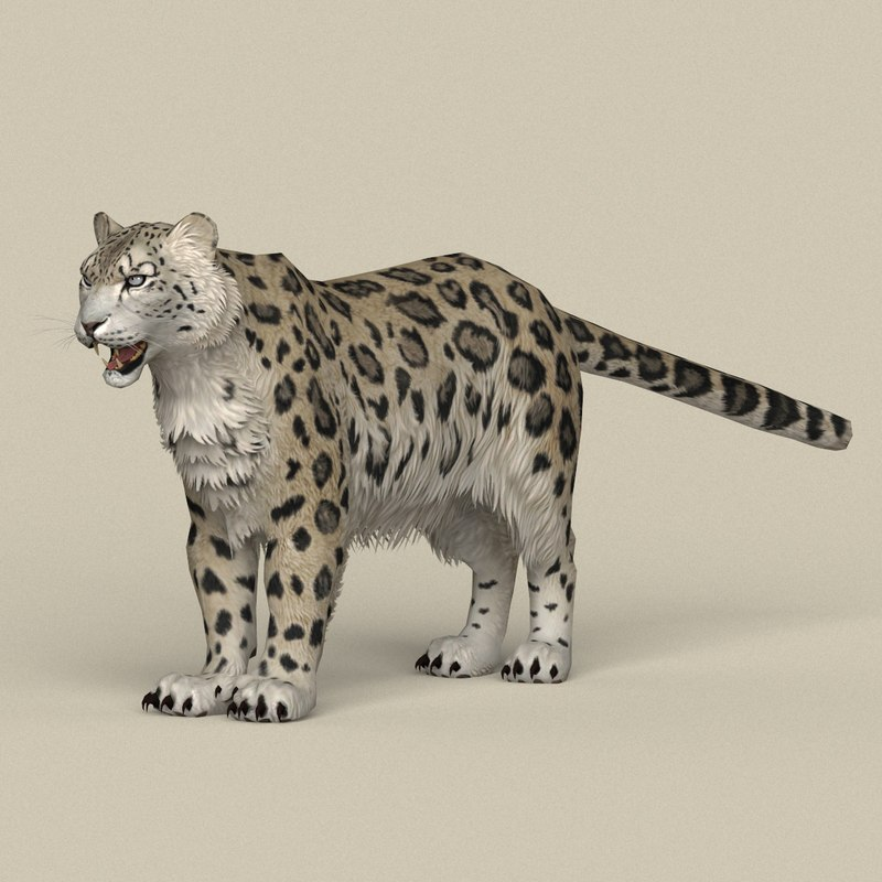 ready realistic snow leopard 3D model