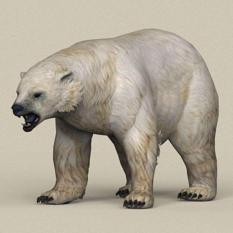 ready polar bear 3D model