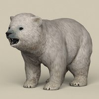 ready polar bear baby model