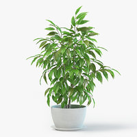 ficus plant pot 3D model
