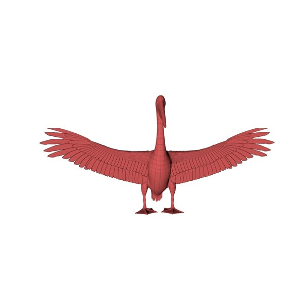 3D model base mesh pelican