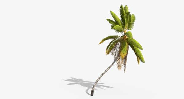 cocos coconut palm tree tropical 3D model