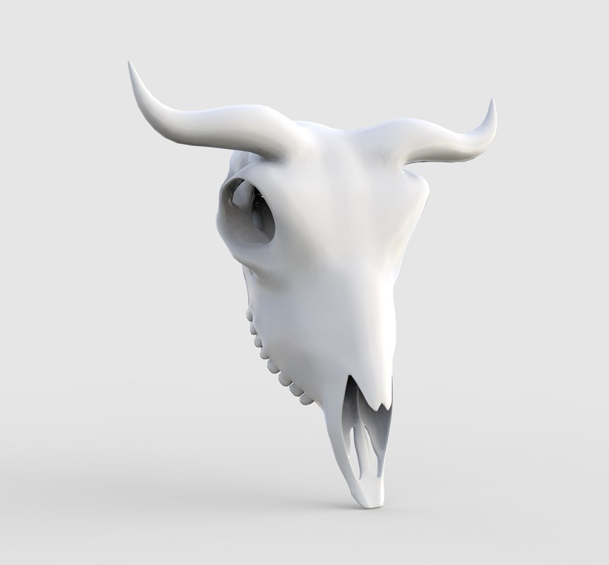 cow skull model